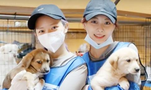 保護犬のボランティアに参加する TWICE ジョンヨン(左)、ツウィ(右)